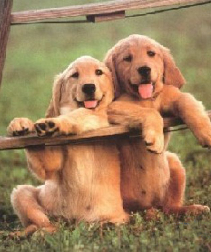 pensioni per cani lago di garda